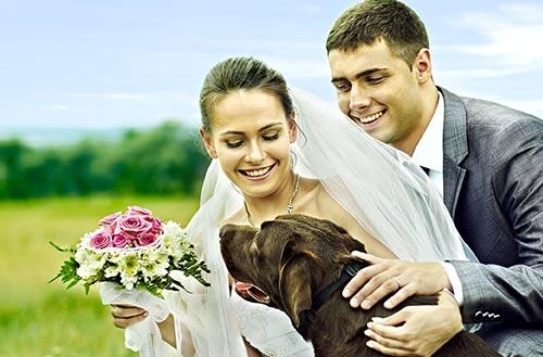 Dog at Jacksonville wedding